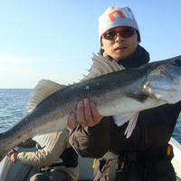31日の釣果情報のサムネイル