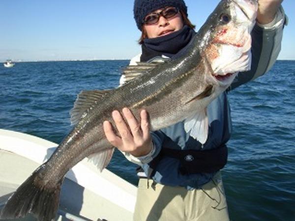 週末の釣果情報
