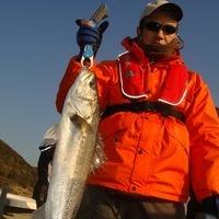 連日80cmまで釣れてます。のサムネイル