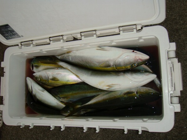 週末の釣果情報のサムネイル