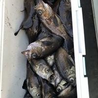 魚も潮に慣れるまでは?人も暑さ対策をお願いします。のサムネイル