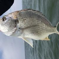イナダ、大サバ、ルアー釣り!アジ、シロギス餌釣り好調です。のサムネイル